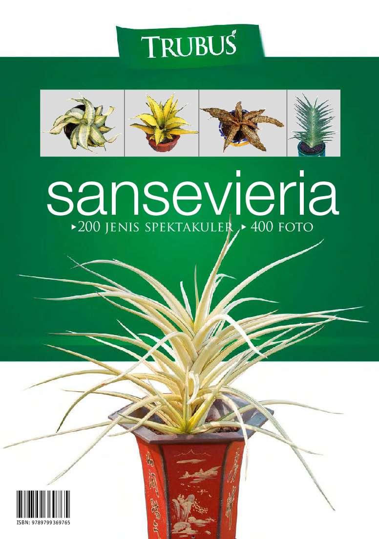 sansevieria